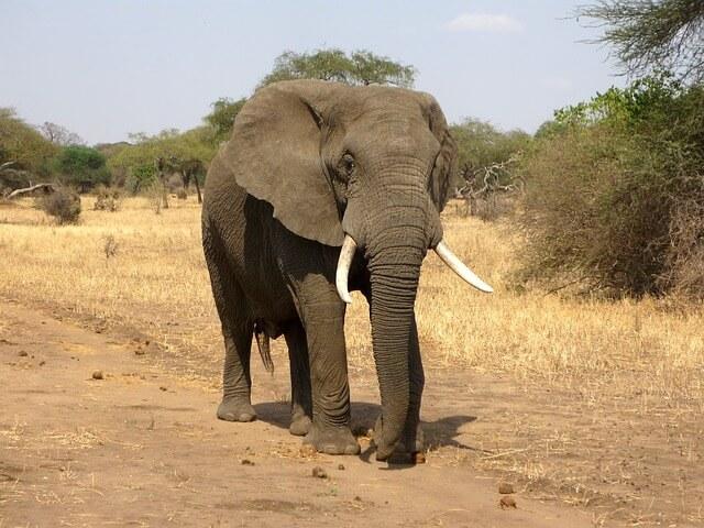 India's National Heritage Animal declared - Elephant