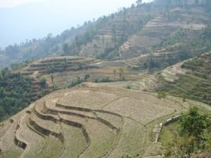उत्तराखंड में कृषि उत्पादन एवं खेती के प्रकार