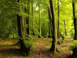 उत्तराखंड के वन क्षेत्र, वन आच्छादित क्षेत्र, वन नीतियाँ
