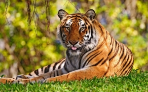 उत्तराखंड के वन्य जीव, वन्य-जीव विहार, राष्ट्रीय उद्यान एवं संरक्षण विहार